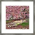 Sunny Patch Under The Cherry Trees Framed Print