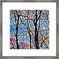 Sunset Cloud Color  3 Framed Print