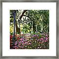 Sunshine Through Savannah Park Trees Framed Print