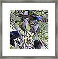 Swallows In Pooler Framed Print