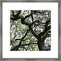 Tampa Trees Framed Print
