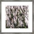Tasseled Sugarcane Framed Print