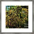 Temperate Rain Forest Framed Print