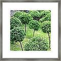 Temple Garden Trees Framed Print