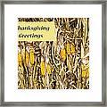 Thanksgiving Greeting Card - Dried Corn Stalks Framed Print