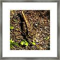 The Art Of Camouflage Framed Print