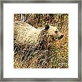 The Berry Hunter Framed Print