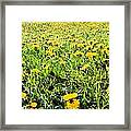 The Burren, County Clare, Ireland Field Framed Print