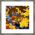 The Colors Of Autumn In Arizona  Framed Print
