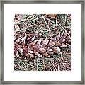 The Fallen Pine Framed Print