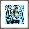 The Fierce Tiger Framed Print