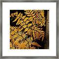 The Golden Fern Framed Print