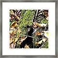 The Hiding Spot Framed Print