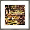The Hiker Framed Print