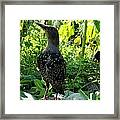 The Jungle Below Our Faces Framed Print