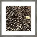 The Last Little Apple On The Tree Framed Print