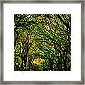 The Mall In Fall Framed Print