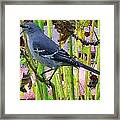 The Mockingbird  Framed Print