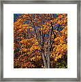 The Moment Of Glory Framed Print