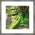 The Moss Covered Roots Framed Print