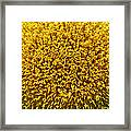 The Nature Of A Sunflower Framed Print