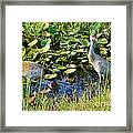 The New Family Framed Print by Lynda Dawson-Youngclaus
