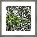 The Northwoods Framed Print