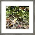 The Patient Frog Framed Print