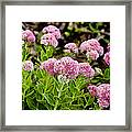 The Pink Cure Framed Print