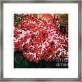 The Scarlet Soft Coral. Similan Islands Framed Print