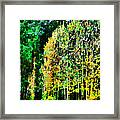 The Speckled Trees Framed Print