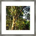 The Strong Tree Framed Print