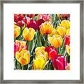 Think Spring Framed Print by Suni Roveto