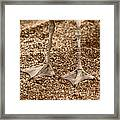 This Is Not A Bird 02 Framed Print