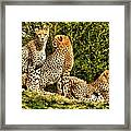 Three Cats Framed Print