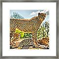 Three Cheetahs Framed Print
