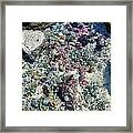 Tide Pool Framed Print