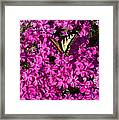 Tiger In The Phlox 5 Framed Print