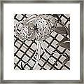 Tiger Lily And Rusty Gate Framed Print
