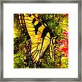 Tiger Swallowtail Butterfly Happily Feeds Framed Print