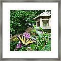Tiger Swallowtail By The Bird Feeder  Framed Print