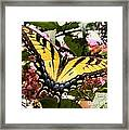 Tiger Tail Framed Print