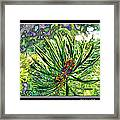 Tiny New Pine Cones Framed Print