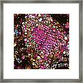 Tlm Of Chondrite Framed Print