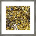 Towering Autumn Aspens With Deep Blue Sky Framed Print