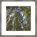 Towering Kodiak Framed Print
