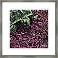 Traversing The Sod Framed Print