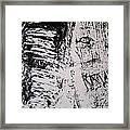 Tree Bark IIi Framed Print