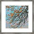 Tree Branches In Autumn Framed Print