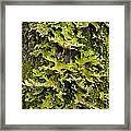Tree Lungwort (lobaria Pulmonaria) Framed Print